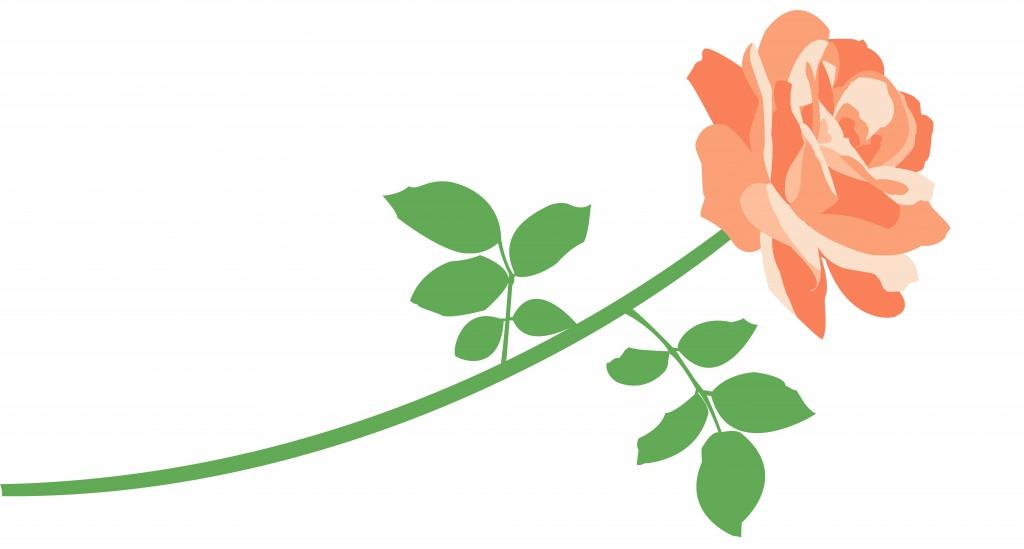 Bild på en ros